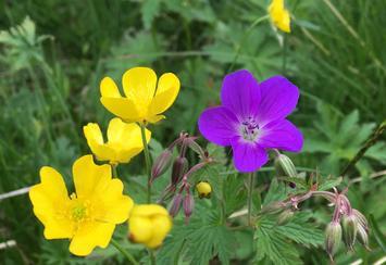 Blomsterbilde illustrasjon